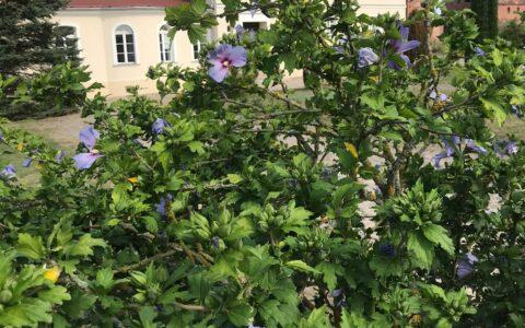 Projekt INT 161 Schwedt – Kulice